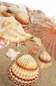 Постер, плакат: ракушки с различной формы и цвета на песке