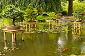 Pond with bonsai