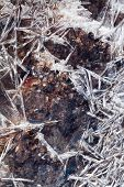 Ice Crystals Under Frozen Brook