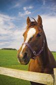 Healthy Horse Portrait