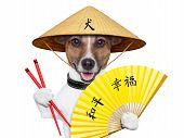 Asian Dog