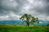 Green Grass Under Stormy Sky