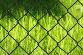 Grass Behind A Fence