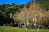 forest edge in Andorra