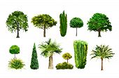 stock photo of vegetation  - vector tree set realictic palm green park - JPG
