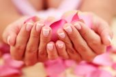 image of french manicure  - female hand with petal of rose  - JPG