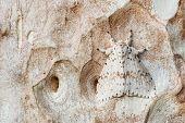 foto of moth larva  - A white moth hiding on tree bark - JPG