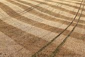 Detail Of Dry Harvested Agriculture Field