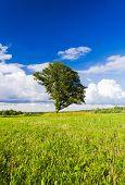 Grass Land Plain Nature