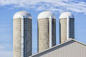 Farm forage silos to store silage for dairy cattle.  Silage can be comprised of grass, corn, hay or