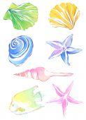 starfish conch and scallop