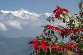 Rhododendron Flower With Annapurna Mountain Range