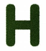 Grass alphabet-H