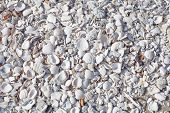 White Sea Shells And Stones