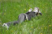 Girl On A Grass
