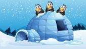 Illustration of the three penguins above the igloo