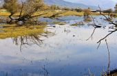 Lake kerkini at north Greece, Macedonia province