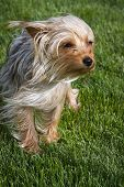 Puppy In The Wind