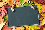 Chalkboard and autumn maple leaves on background