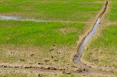 Gully In Young Rice Ready To Growing