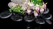 Spa Setting Of Branch Pink Fuchsia Flower, Towels, Leaf Fern  And Zen Basalt Stones With Dew,