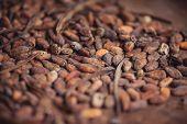 Roasting cocoa