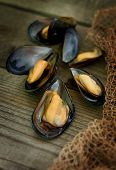 Baked Black Sea mussels.