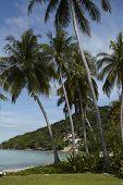Tropical Beach With Palms, Phi Phi Island, Thailand