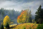 Golden Autumn. Foggy Morning In Mountains