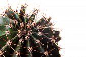 Cactus, Succulent