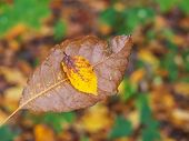 a leaf on the bark of a tree in autumn. colorful in the season