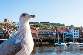 Scenic View Of Whitby City And Abbey In Sunny Autumn Day.whitby Is A Seaside Town And Port In North