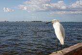 A Large White Bird