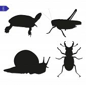 Vector Silhouettes Of Insects And Reptiles
