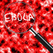 Ebola under a magnifying glass