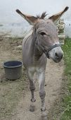Donkey and basket