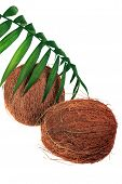 Coconut And Fresh Plant