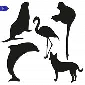 Set Of Vector Silhouettes Of Animals
