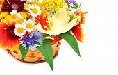 Beautiful Wildflowers, Chamomiles, Chrysanthemums, Cornflower