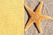 Starfish On The Sand And Sackings