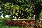 Azaleas in a Landscape
