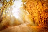 Autumn Landscape With Sunny Rays