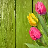 Tulips over shabby wooden background