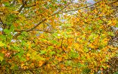 Abstract Foliage Background, Beautiful Tree Branch In Autumnal Forest