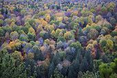 Fall forest trees viewed from Lookout trail in Algonquin Provincial Park, Canada.