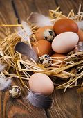 foto of quail egg  - Speckled quail eggs and chicken eggs in the manger on a rustic background - JPG