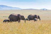 ������, ������: elephant family walking in the savanna