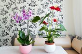 image of pot  - Live potted plants in pots in the interior - JPG