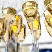 image of champagne glasses  - champagne glasses filled with champagne are lined up ready to be served  - JPG