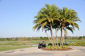 Golf Cart Palm Trees and Florida Hotel Resort